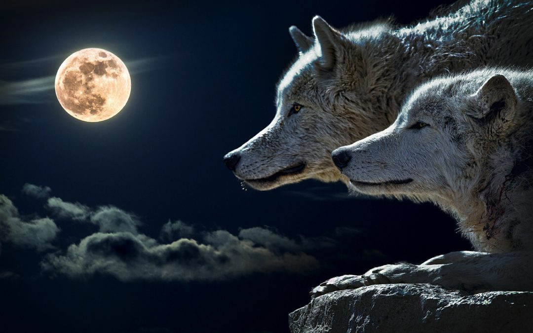 'Howling confidence,' other lunar topics