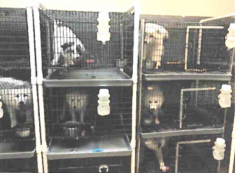 puppy mill pic 2